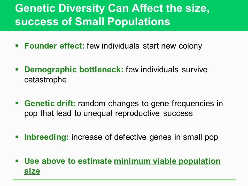 Genetic Diversity Can Affect the size, success of Small Populations