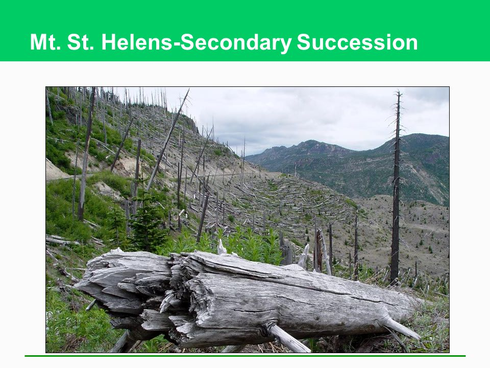 Mt. St. Helens-Secondary Succession