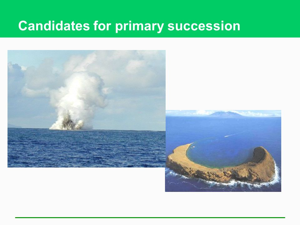 Candidates for primary succession