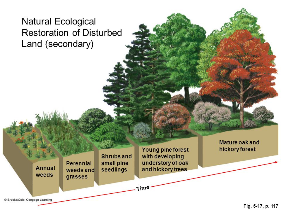 Natural Ecological Restoration of Disturbed Land (secondary)