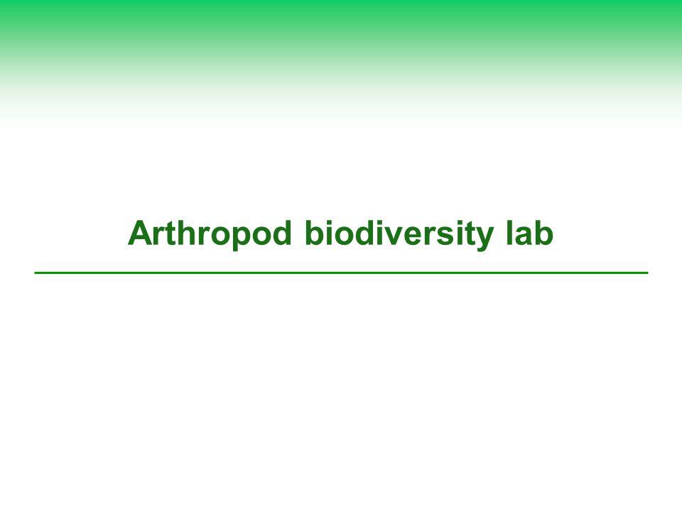 Arthropod biodiversity lab