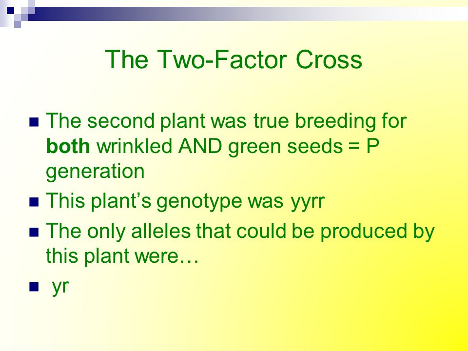 The Two-Factor Cross The second plant was true breeding for both wrinkled AND green seeds = P generation.