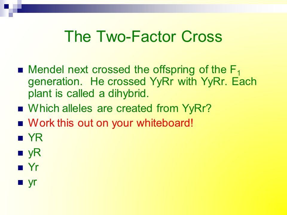 The Two-Factor Cross Mendel next crossed the offspring of the F1 generation. He crossed YyRr with YyRr. Each plant is called a dihybrid.