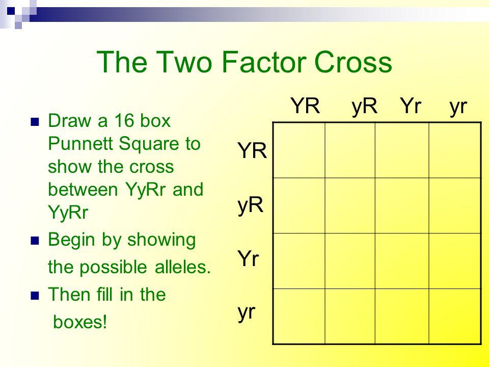 The Two Factor Cross YR yR Yr yr YR yR Yr yr r yr