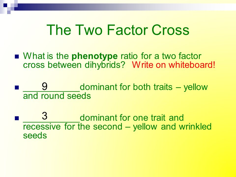 The Two Factor Cross What is the phenotype ratio for a two factor cross between dihybrids Write on whiteboard!