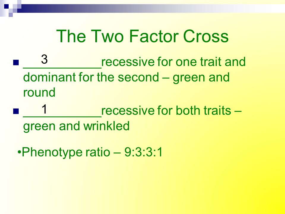 The Two Factor Cross 3. ___________recessive for one trait and dominant for the second – green and round.