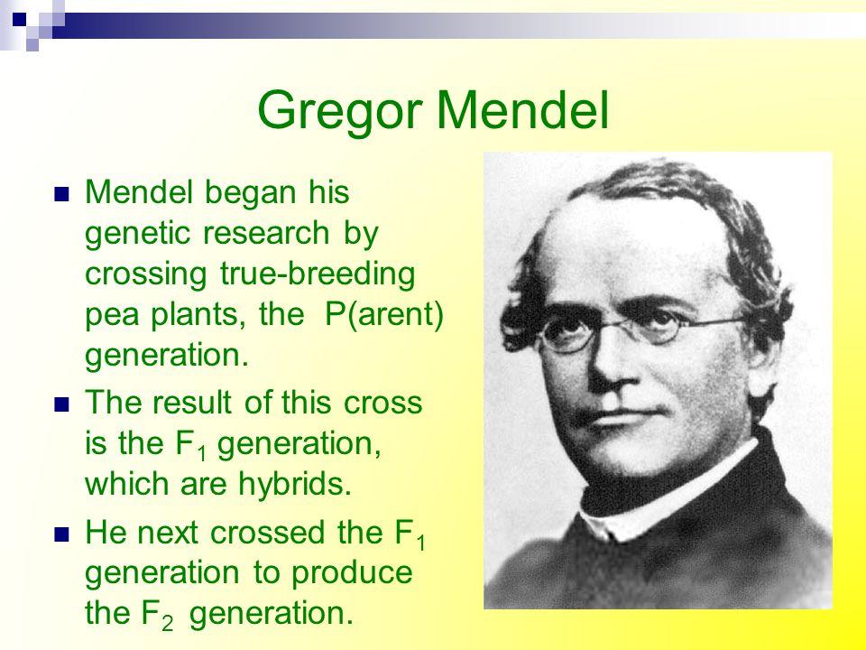 Gregor Mendel Mendel began his genetic research by crossing true-breeding pea plants, the P(arent) generation.