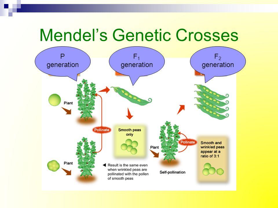 Mendel's Genetic Crosses