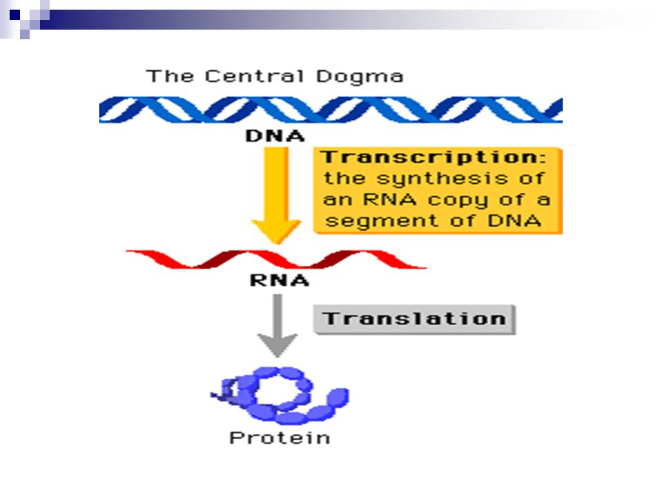 RNA is used in the production of proteins.
