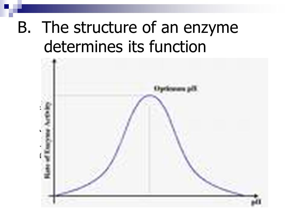 B. The structure of an enzyme determines its function
