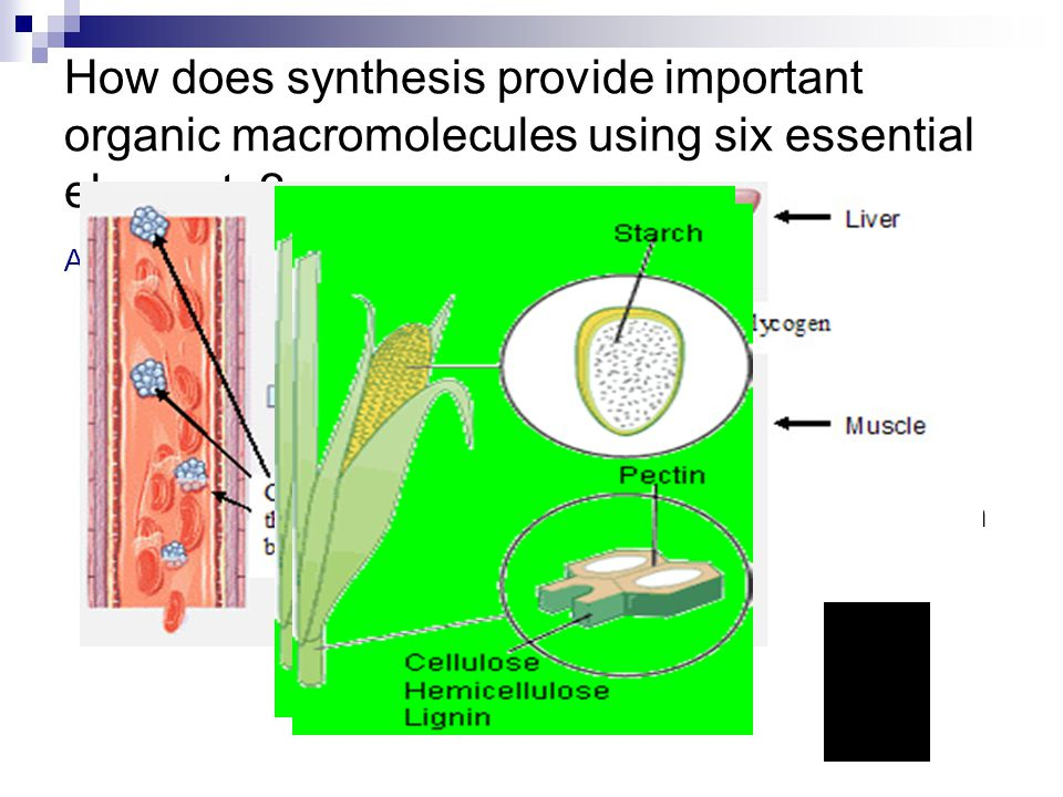 How does synthesis provide important organic macromolecules using six essential elements