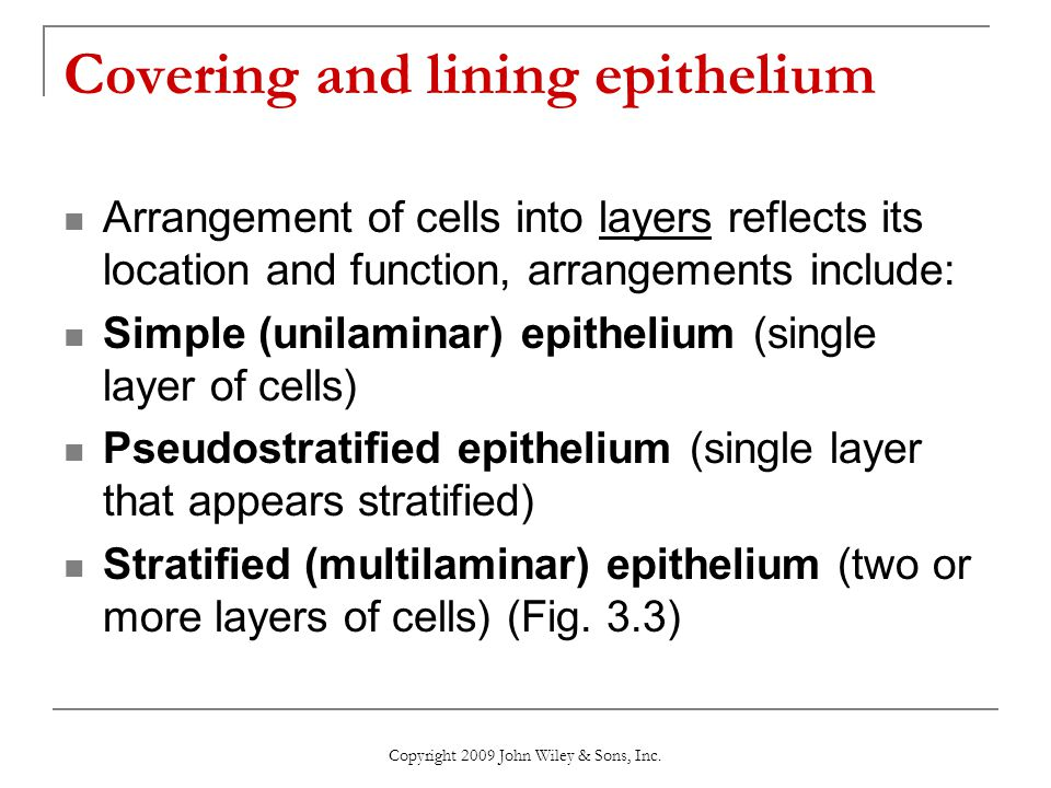 Covering and lining epithelium