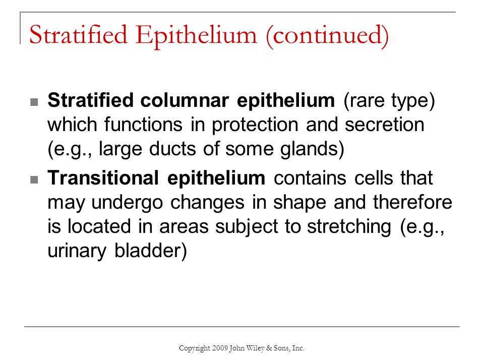 Stratified Epithelium (continued)