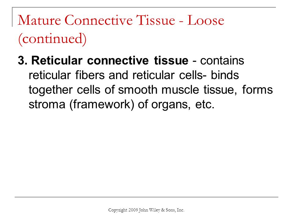 Mature Connective Tissue - Loose (continued)