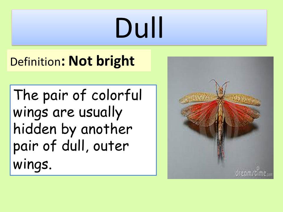 Dull Definition: Not bright.