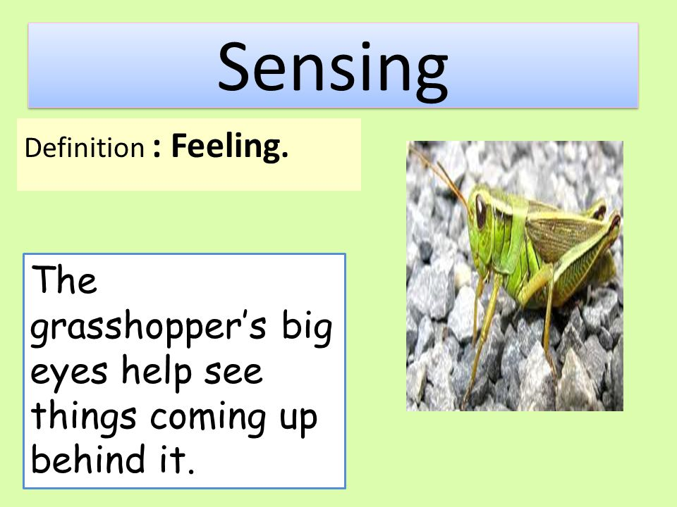 Sensing Definition : Feeling. The grasshopper's big eyes help see things coming up behind it.