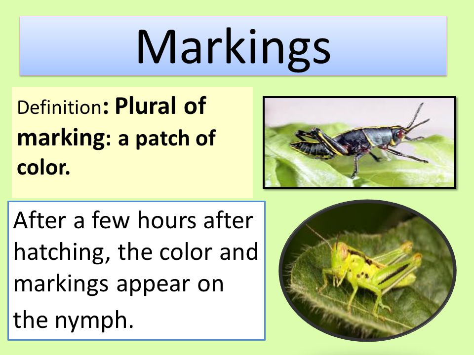 Markings Definition: Plural of marking: a patch of color.