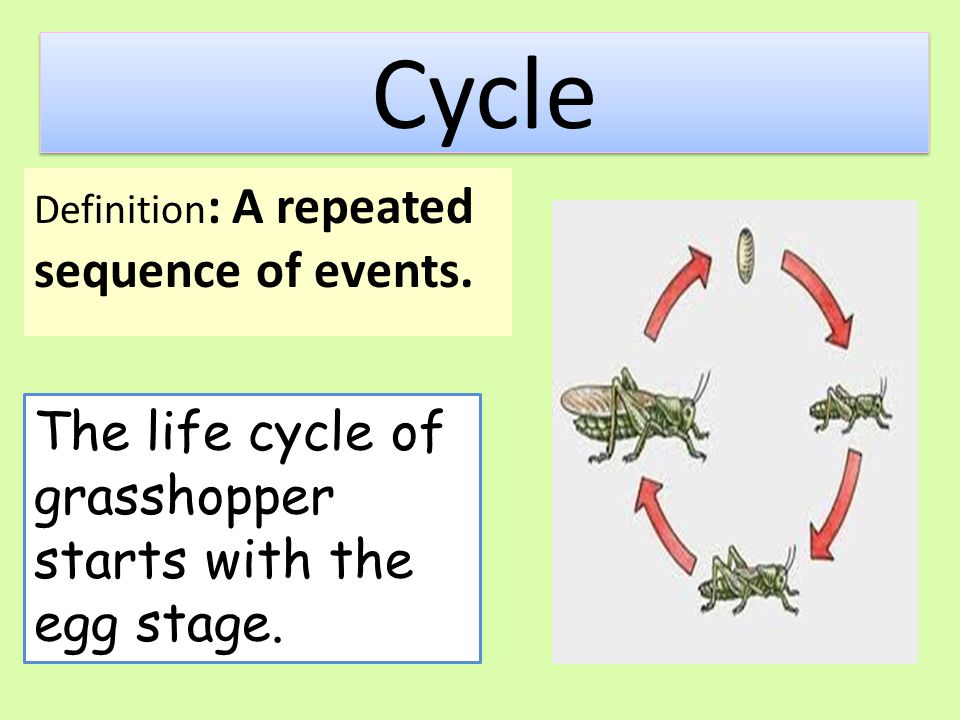 Cycle The life cycle of grasshopper starts with the egg stage.