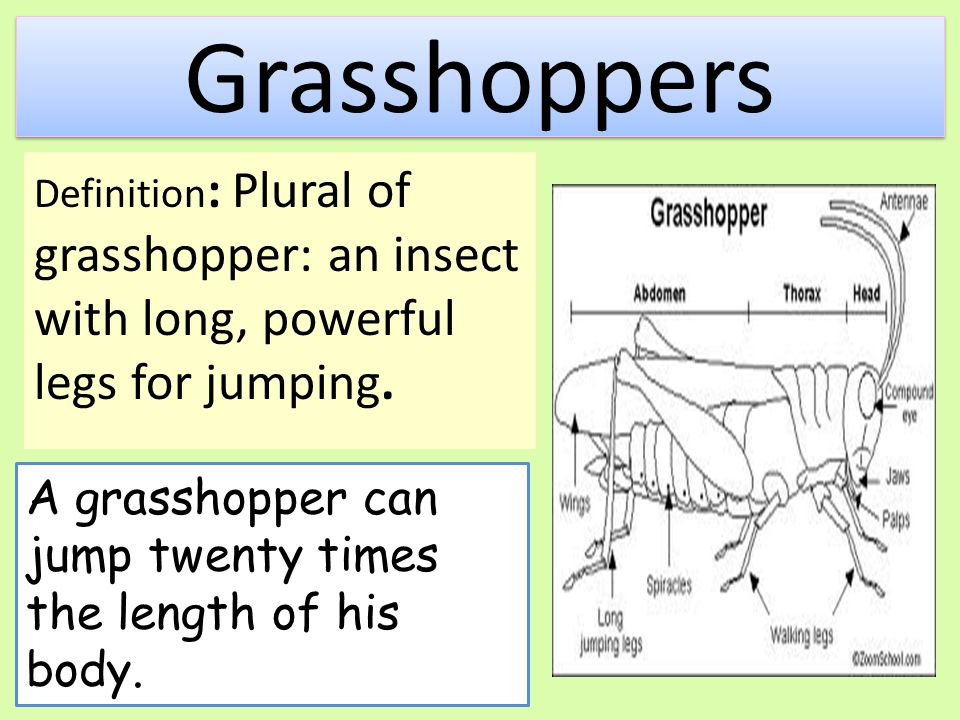Grasshoppers Definition: Plural of grasshopper: an insect with long, powerful legs for jumping.