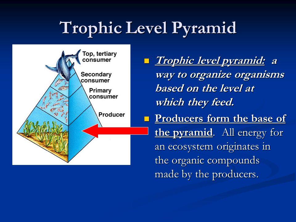 Trophic Level Pyramid Trophic level pyramid: a way to organize organisms based on the level at which they feed.