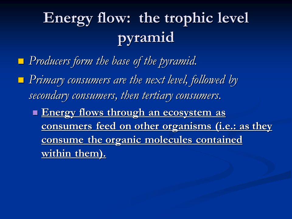 Energy flow: the trophic level pyramid