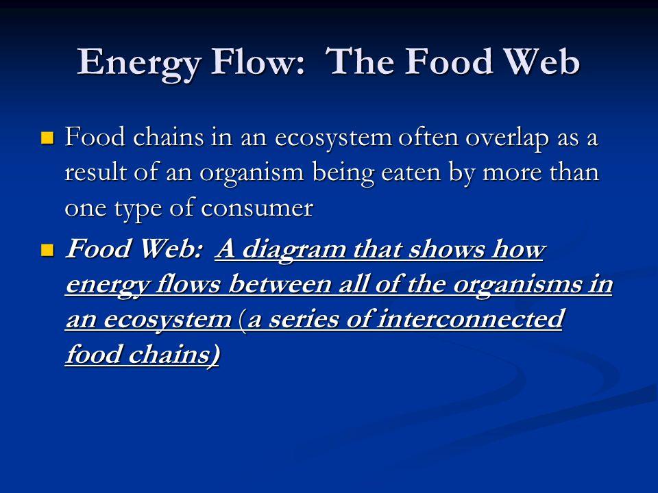 Energy Flow: The Food Web