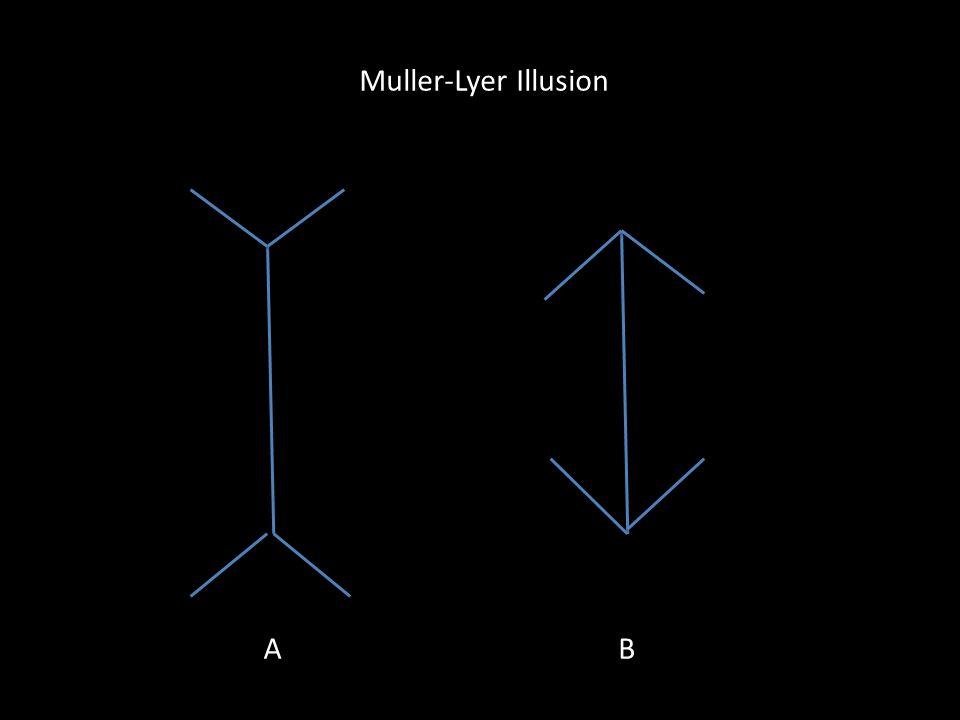 Muller-Lyer Illusion A B