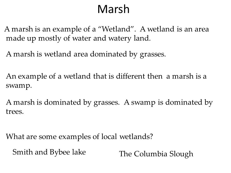 Marsh A marsh is an example of a Wetland . A wetland is an area