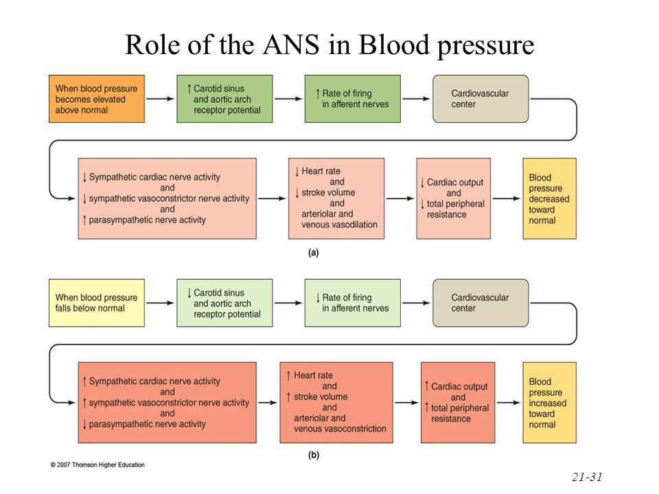 Role of the ANS in Blood pressure