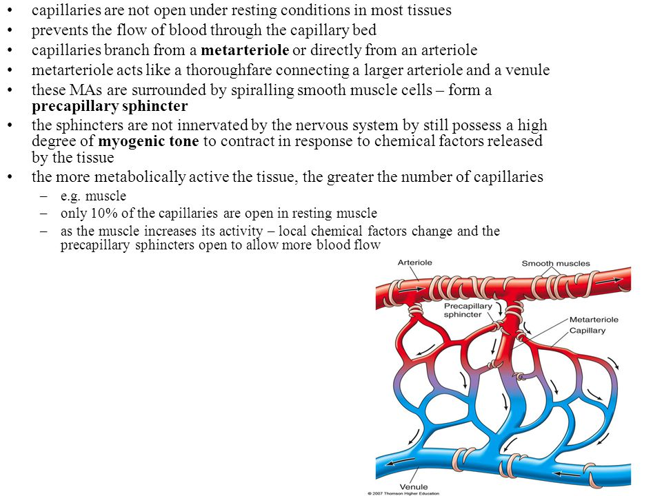 capillaries are not open under resting conditions in most tissues