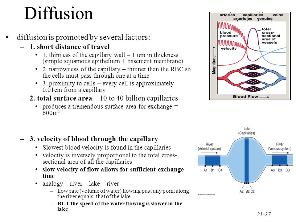 Diffusion diffusion is promoted by several factors: