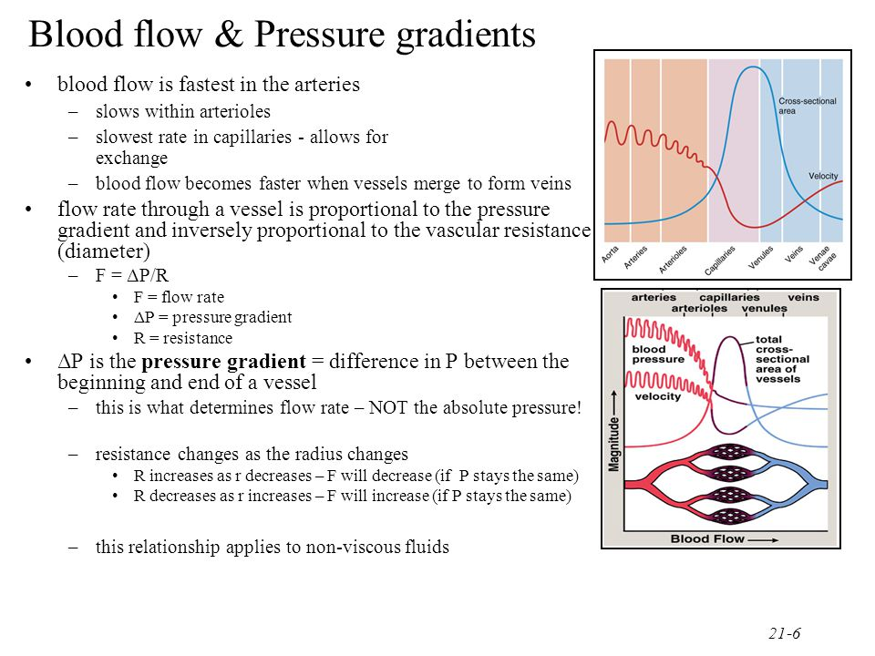 Blood flow & Pressure gradients