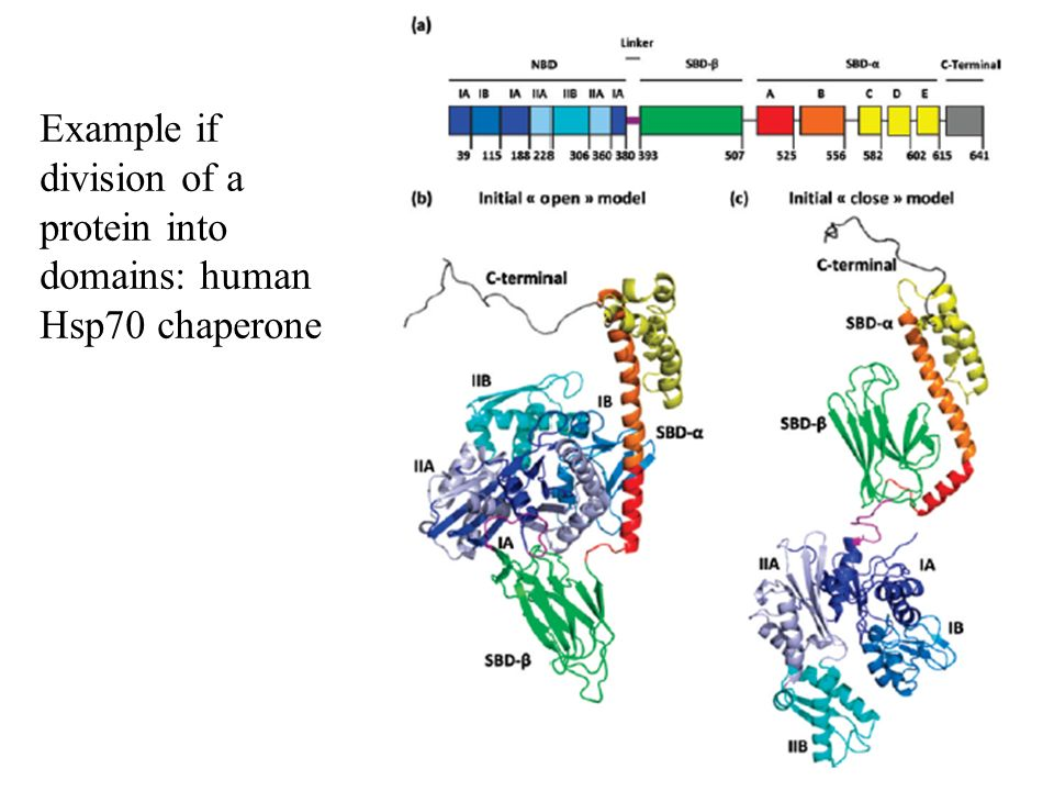 Example if division of a protein into domains: human Hsp70 chaperone