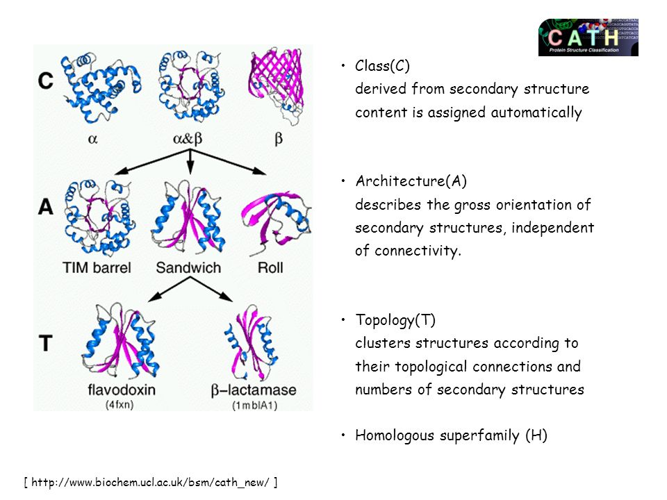 Homologous superfamily (H)