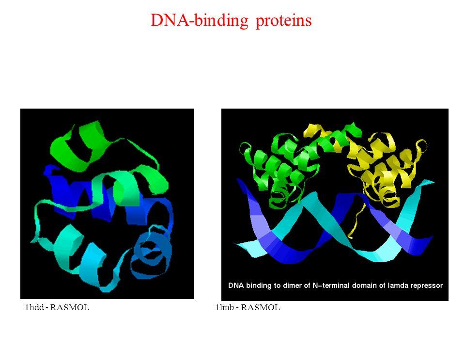 DNA-binding proteins 1hdd - RASMOL 1lmb - RASMOL