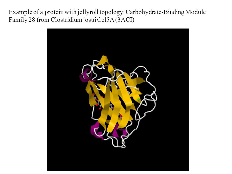 Example of a protein with jellyroll topology: Carbohydrate-Binding Module Family 28 from Clostridium josui Cel5A (3ACI)
