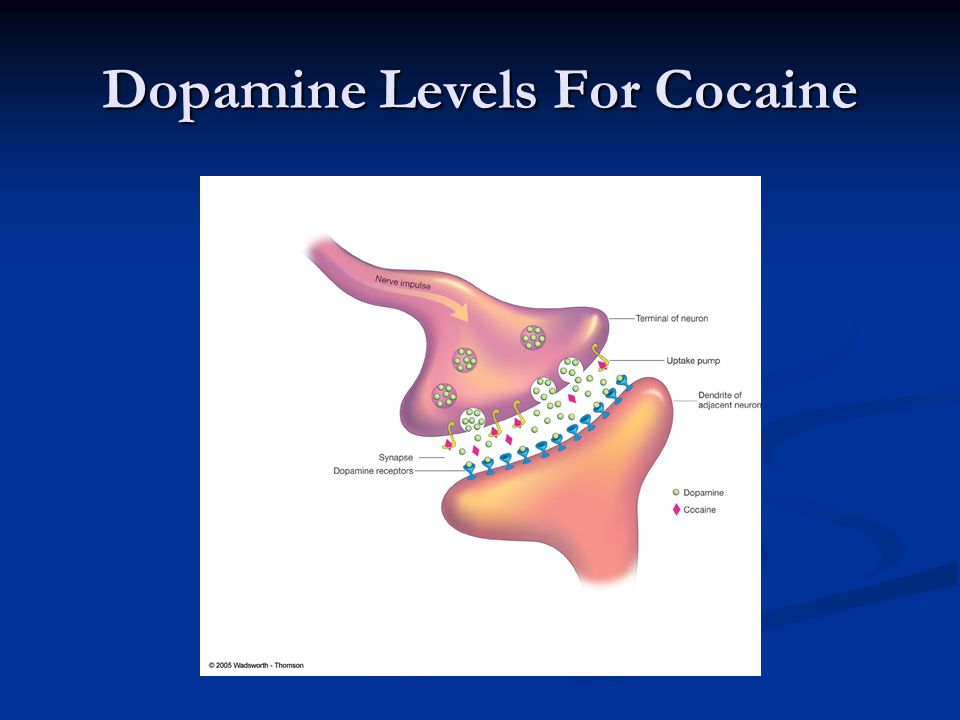 Dopamine Levels For Cocaine