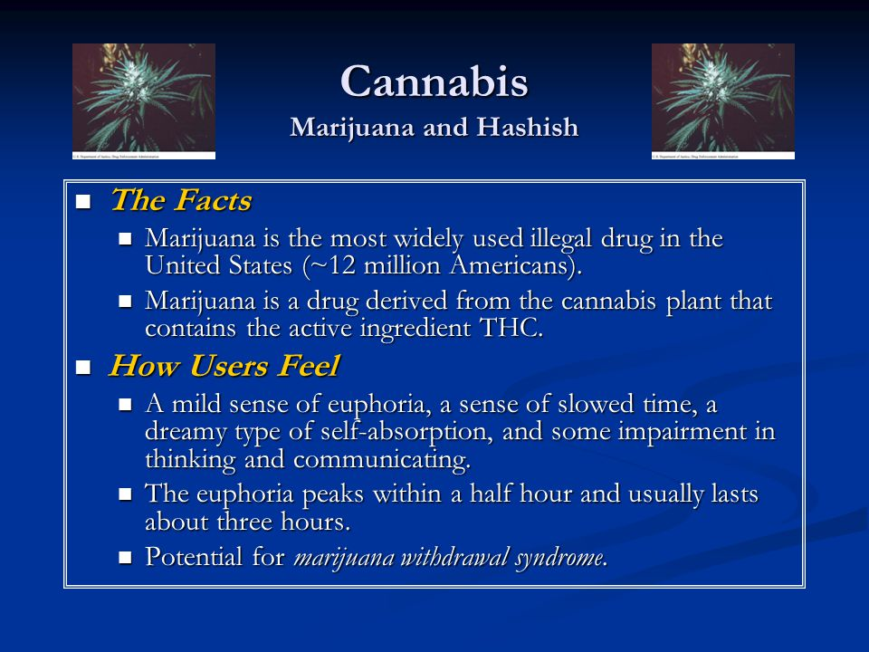 Cannabis Marijuana and Hashish
