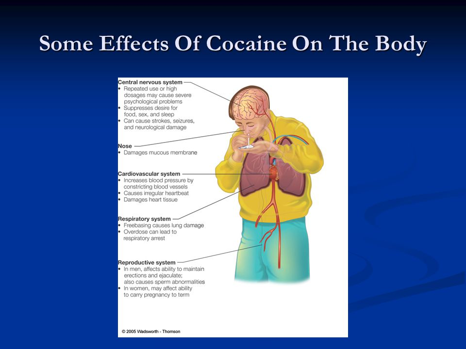 Some Effects Of Cocaine On The Body