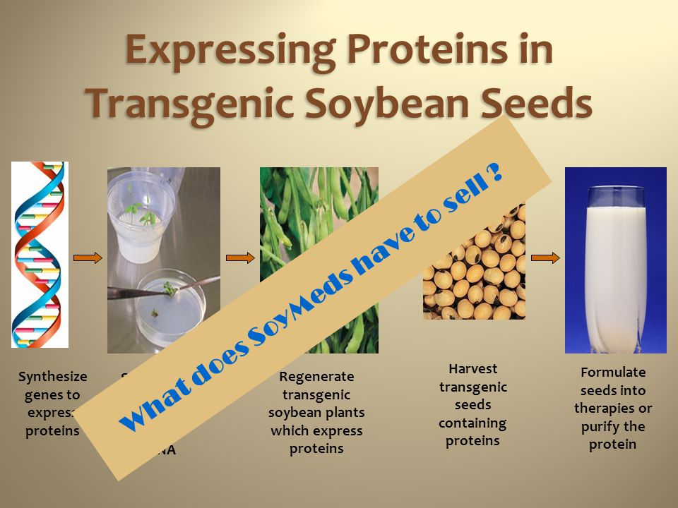 Expressing Proteins in Transgenic Soybean Seeds