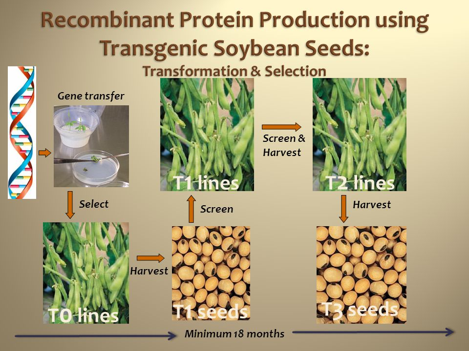 Recombinant Protein Production using Transgenic Soybean Seeds: Transformation & Selection