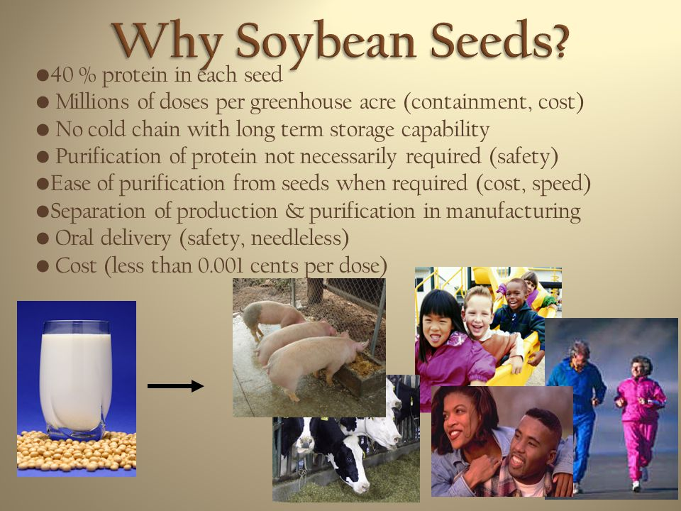 Why Soybean Seeds 40 % protein in each seed