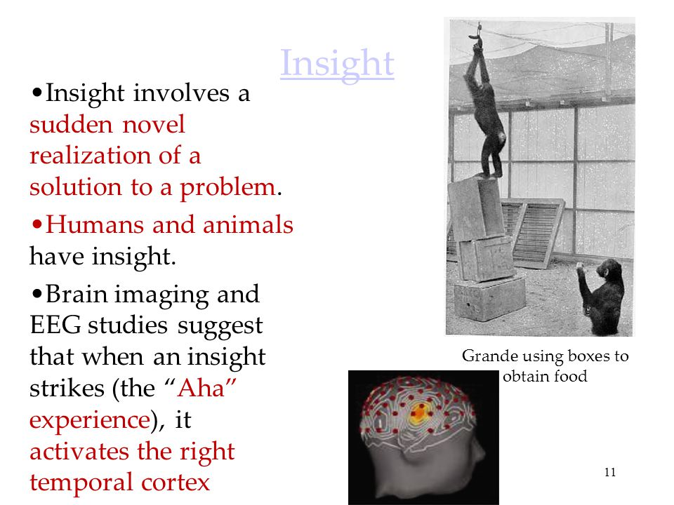Insight Insight involves a sudden novel realization of a solution to a problem. Humans and animals have insight.