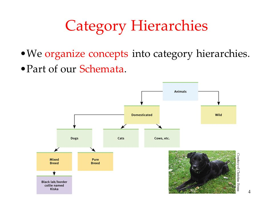 Category Hierarchies We organize concepts into category hierarchies.