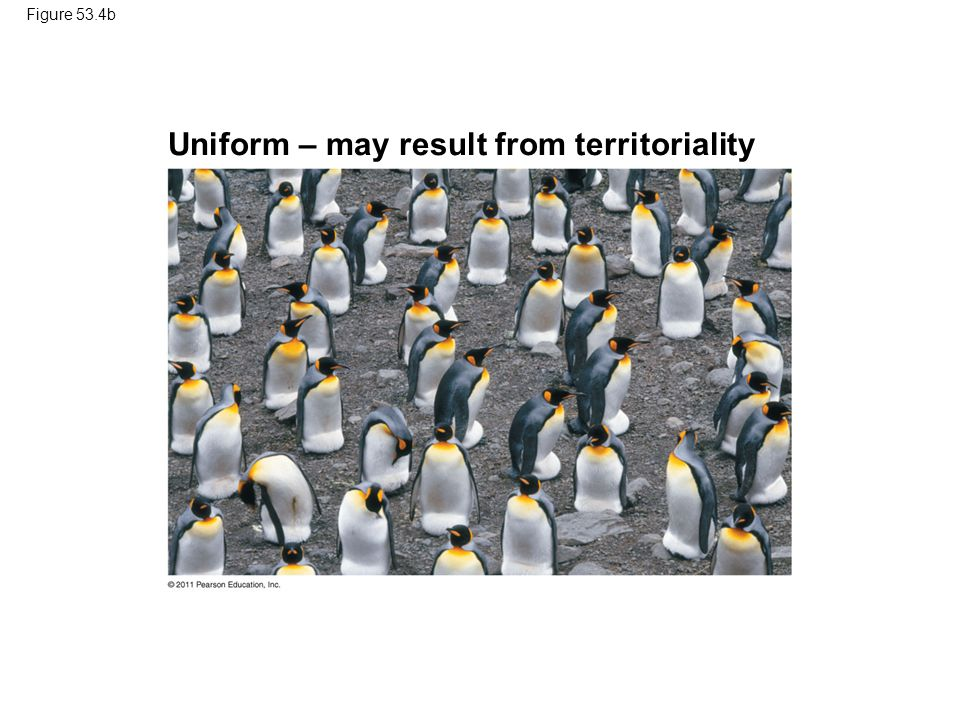 Uniform – may result from territoriality