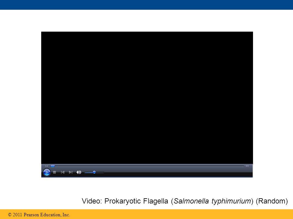 Video: Prokaryotic Flagella (Salmonella typhimurium) (Random)