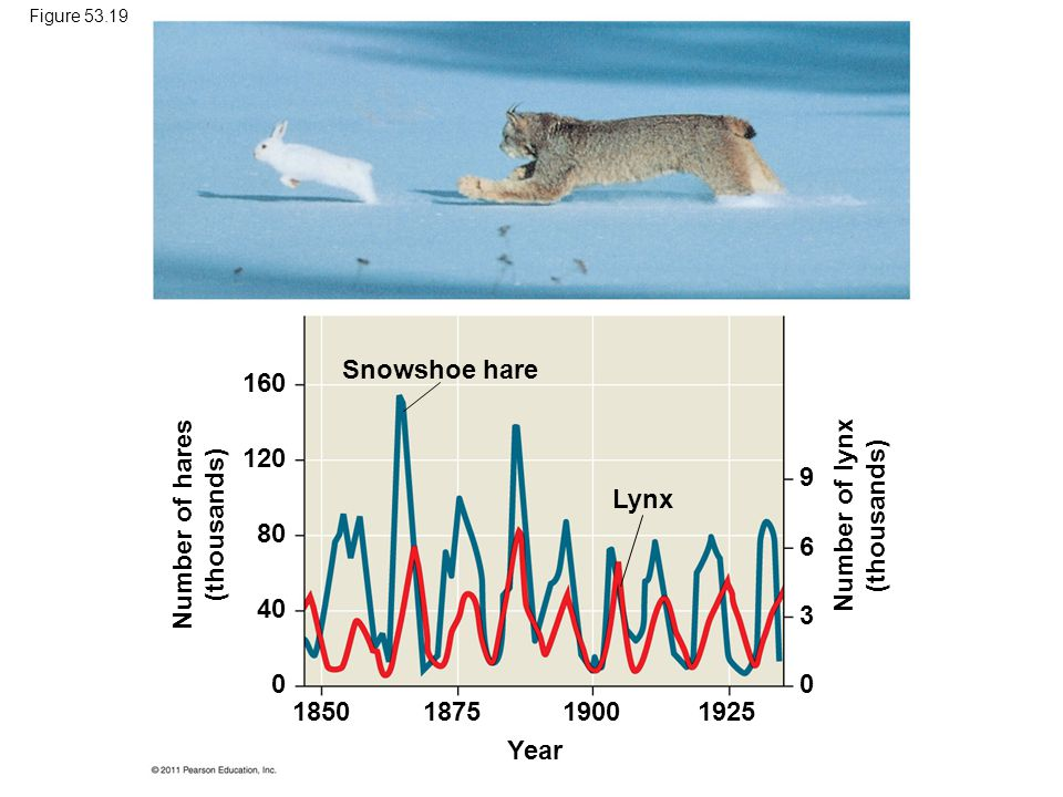 Number of hares (thousands) Number of lynx (thousands)