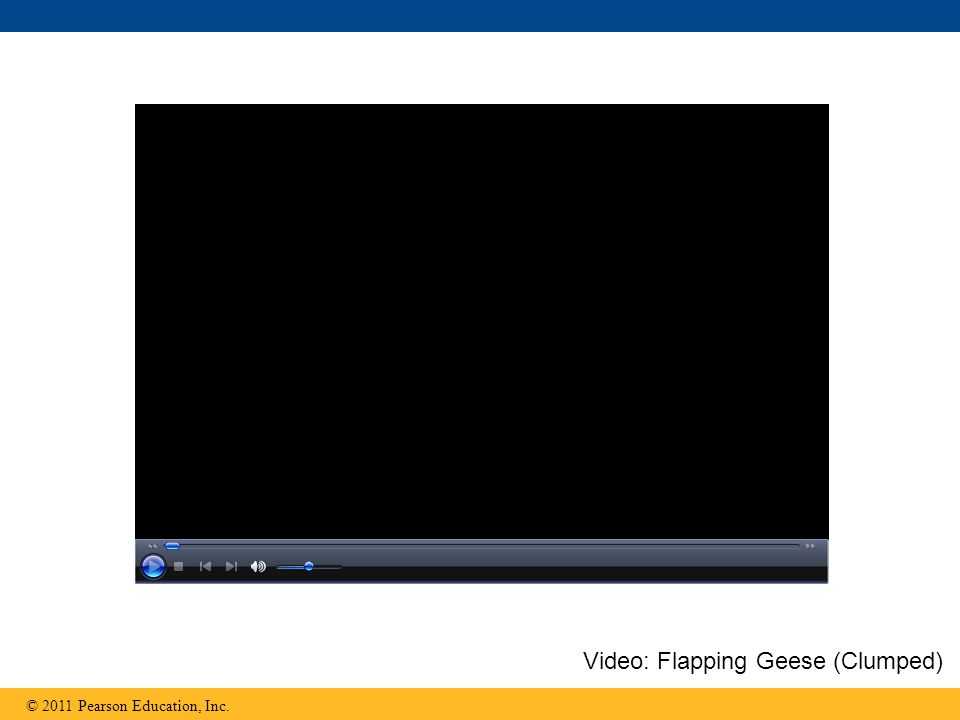 Video: Flapping Geese (Clumped)