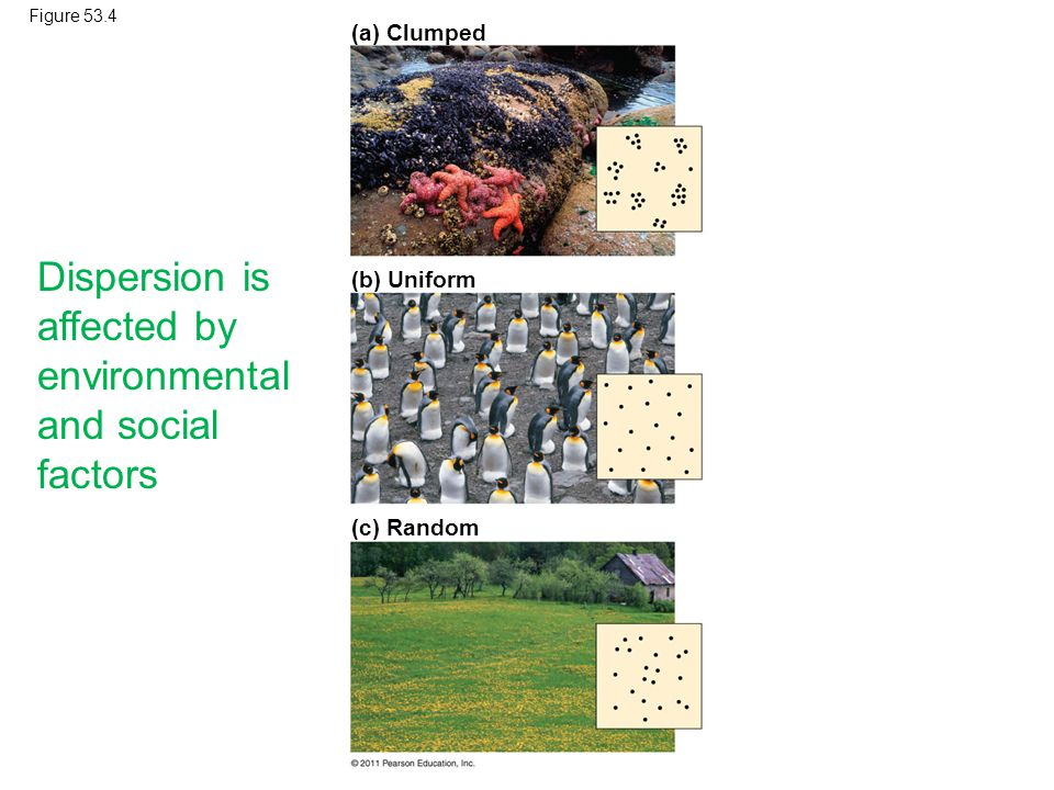 Dispersion is affected by environmental and social factors