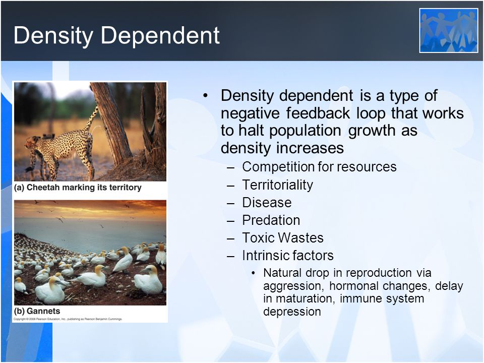 Density Dependent Density dependent is a type of negative feedback loop that works to halt population growth as density increases.